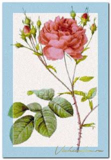 "Download cross stitch scheme RED001 ""Rosa centifolia Angelica rubra"" Scarlet Quince"