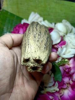 sanggar bertuah, penglarisan judi kelapa unik mata tiga