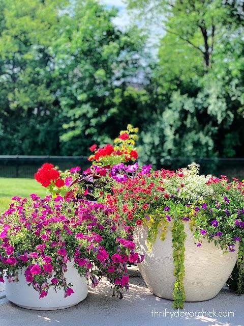 outdoor planter flowers