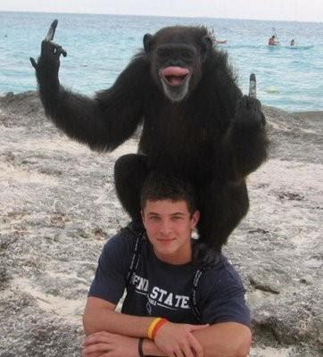 Witziger Affe zeigt Stinkefinger am Strand