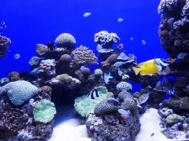 Aquarium de Palma de Mallorca