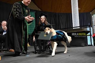 Perrito que acompañó a joven en silla de ruedas a la Universidad se graduó con ella