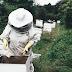 Rój, czyli Pszczółka Maja dla dorosłych
