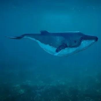 देवमासा, Whale fish name in Marathi