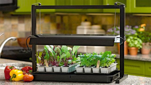 best Grow Light for Indoor Growing