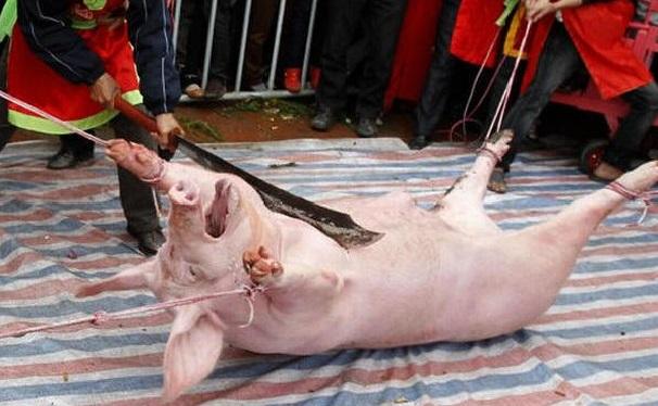 """""""A pior coisa, pior do que o perigo físico, é o impacto emocional. Se você trabalha, por qualquer período de tempo, onde os porcos são mortos, você desenvolve uma atitude que deixa você matar coisas, mas que não deixa você ter piedade. Você pode olhar nos olhos de um porco que está perambulando pelo chão ensanguentado, e você pensa: Deus, esse é um belo animal. Você quer acariciá-lo. Porcos no chão da morte vieram em minha direção e se abrigaram debaixo das minhas pernas como cachorrinhos. Dois minutos depois eu os tinha matado - bati com uma barra até que morressem. Eu não posso ter piedade."""""""