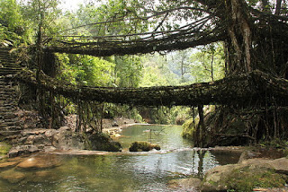 Double  Living Root Bridge