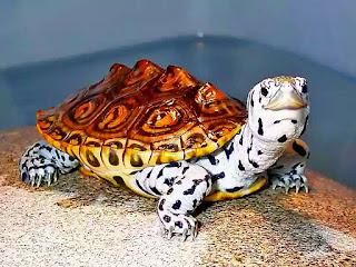 merawat-kura-kura-dbt.jpg