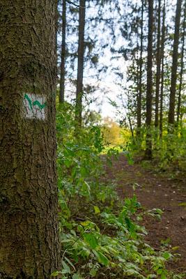 WesterwaldSteig 13. Etappe Flammersfeld – Horhausen | Klettersteig Hölderstein 03