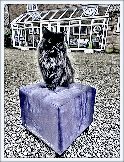 Pandora's Purrple Pouffe Selfie ©BionicBasil® Caturday Art