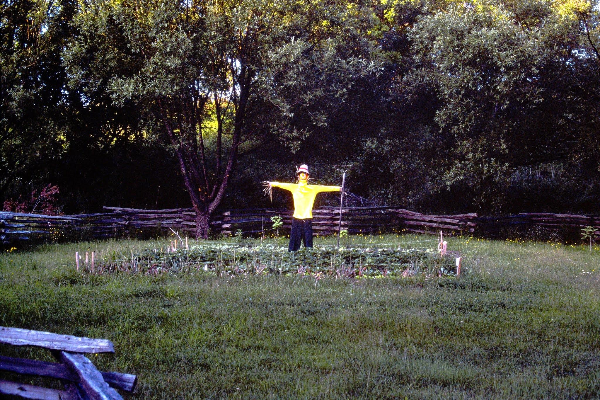 Scarecrow - June 1978