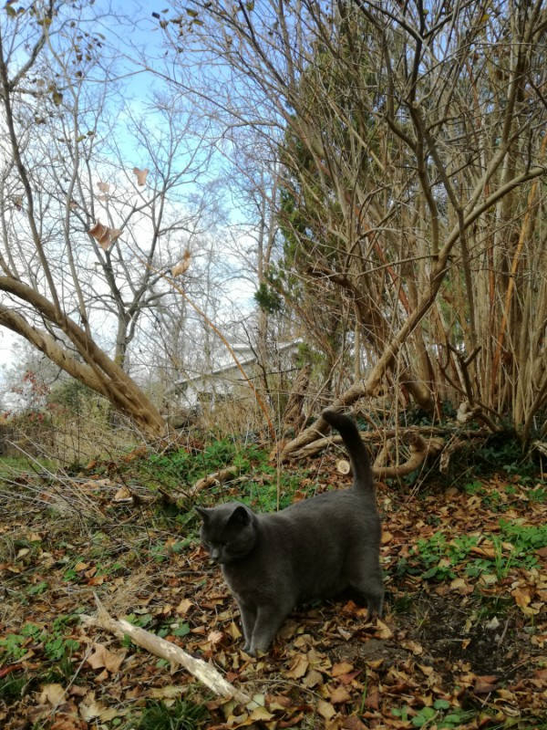 ithaca walking trails