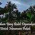 Medium Yang Boleh Digunakan Untuk Menanam Pokok Bunga/Berbuah dan Sayuran Hijau