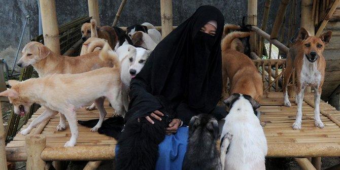 MUI Beri Penjelasan Soal Hukum Merawat Anjing Liar