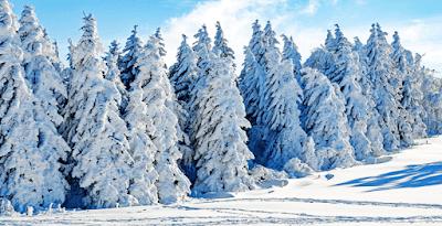 Pemandangan Salju Musim Dingin Sepanjang Tahun