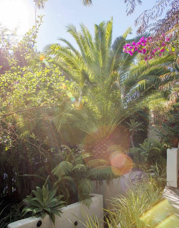 Villa pool area landscape design tips and notes