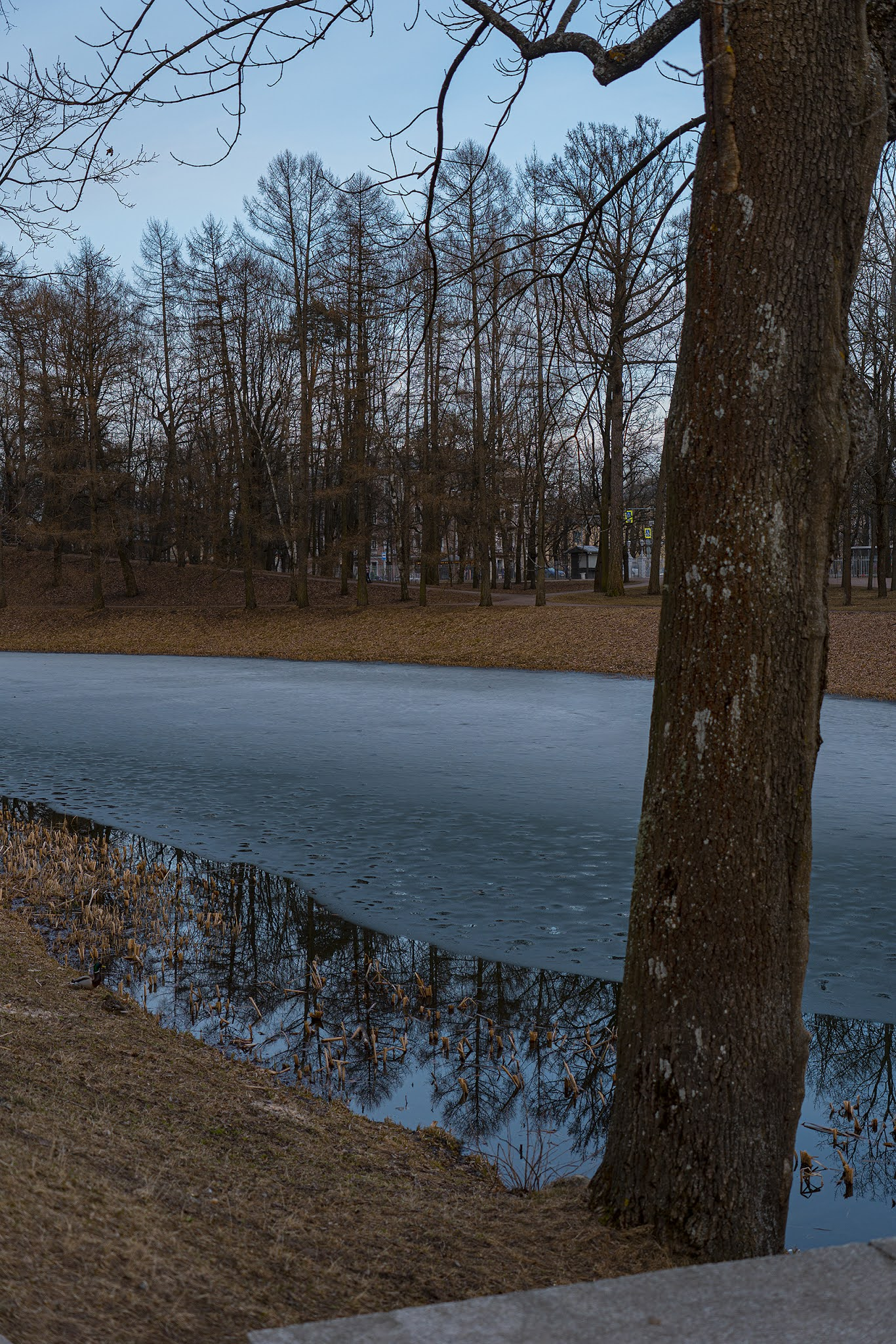 photo Igor Novik Pushkin park autumn spring early spring atmosphere nature lake ice