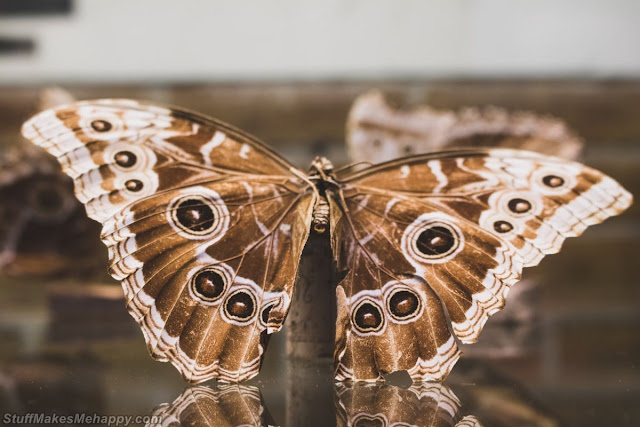 Butterfly Photography, Butterfly Pictures and Wallpapers