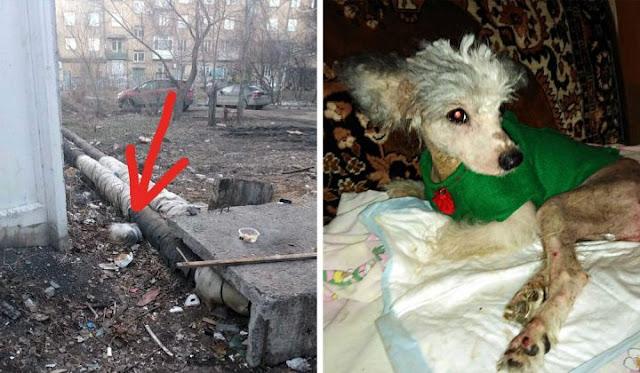 Возле теплотрассы бросили собаку с парализованными лапами