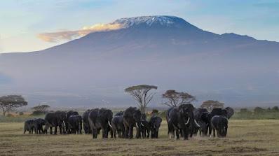 A Kenya Safari Holiday Must Include The Meru National Park