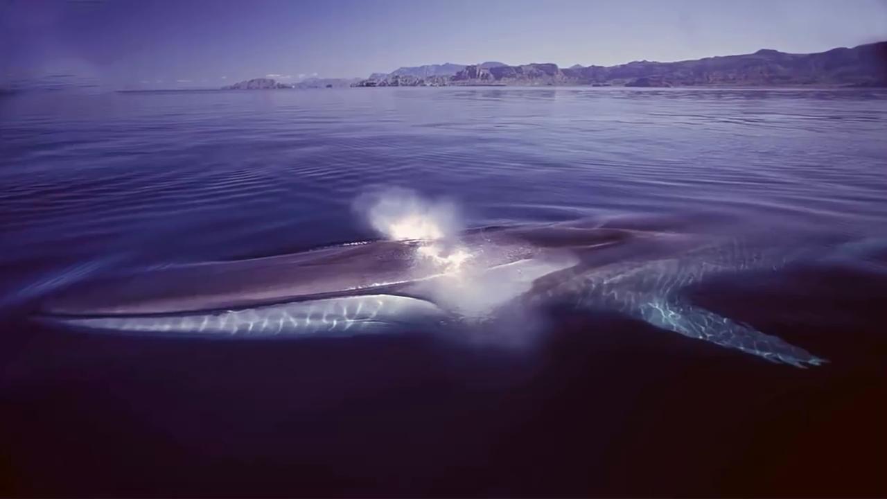 الحوت الذي يمكن أن يكون قد التهم نبي الله يونس عليه الصلاة والسلام