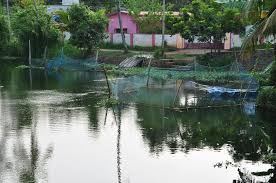 Fish farming in a pond