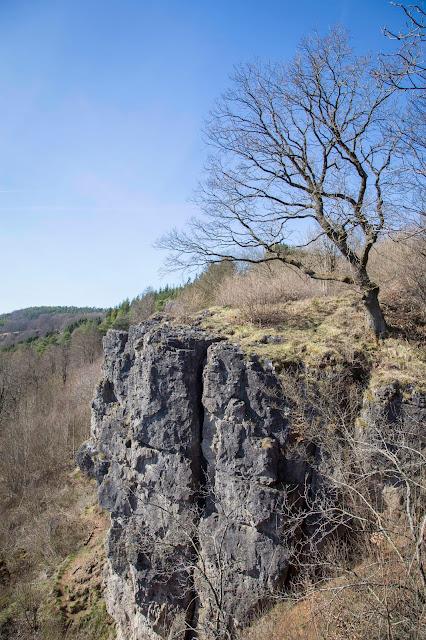 Vulkaneifel-Pfad  Gerolsteiner Felsenpfad  Eifelsteig 04