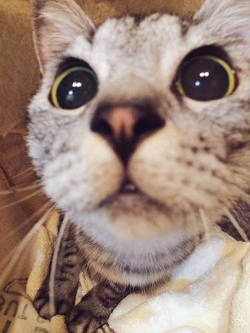 迫り来る猫その3