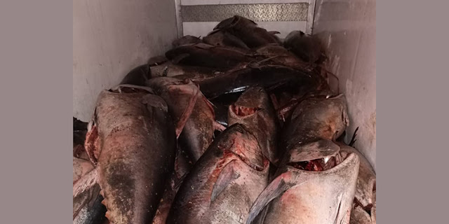 المهدية : حجز أكثر من 4 أطنان من التن الأحمر المحجر صيده