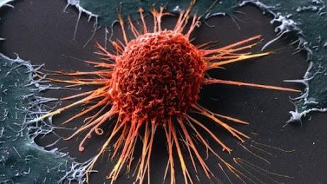 Daun kelor pencegah kanker