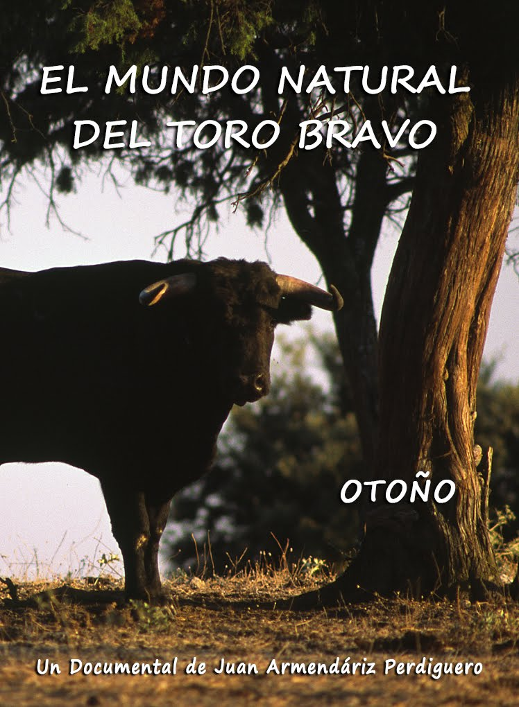 DOCUMENTAL. EL MUNDO NATURAL DEL TORO BRAVO. OTOÑO