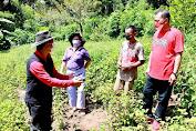Rembang Perkenalkan Tanaman Nilam Kepada Petani di Tareran