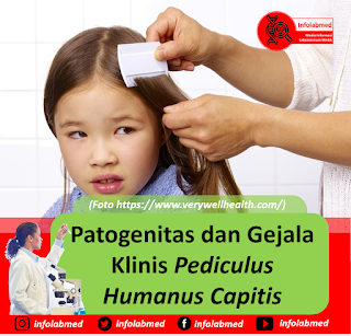 Patogenitas dan Gejala Klinis Pediculus Humanus Capitis