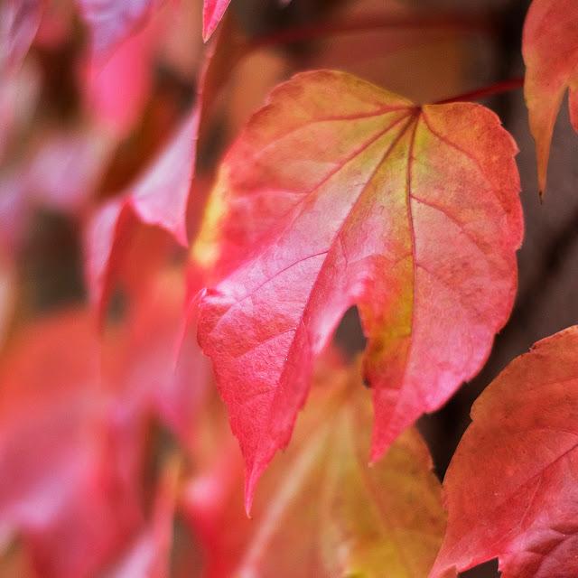 Herbstlaub-Fotografie