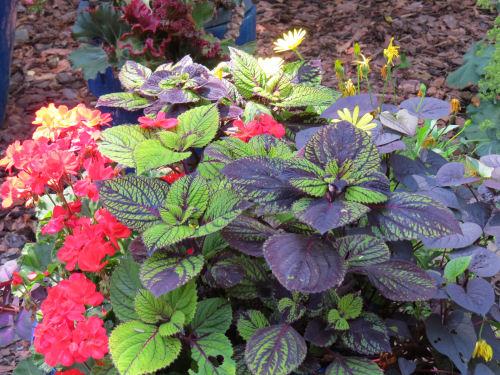 Mason County Garden Tour coleus planter