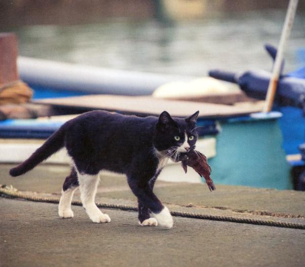 tokyo cat island