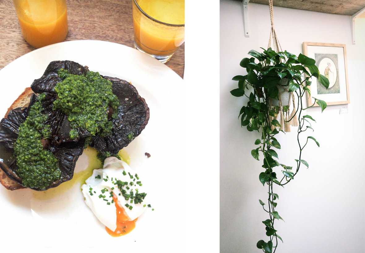 Veggie brunchie and plant in coffee shop
