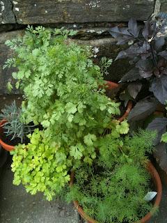 life on pig row, herb garden, gardening