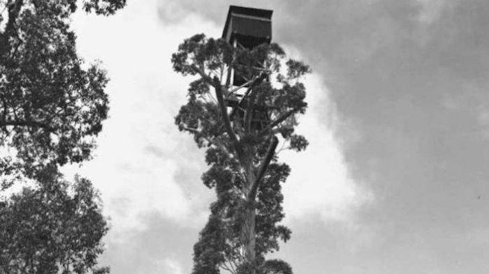 Rumah Disita Bank, Orang Ini Tinggal di Atas Pohon