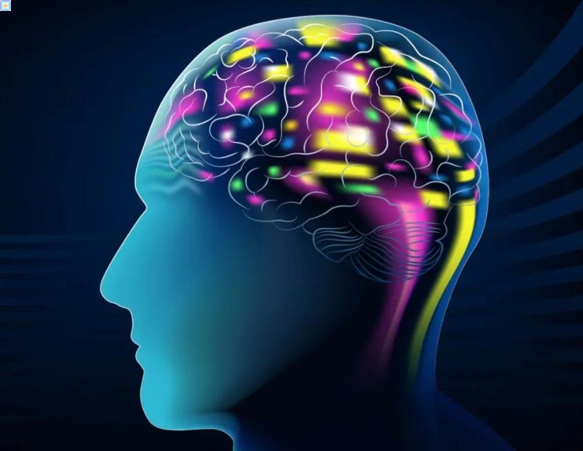 شركة Neuralink تجري بحث لعلاج الأمراض عبر زراعة شريحة حاسب للمخ