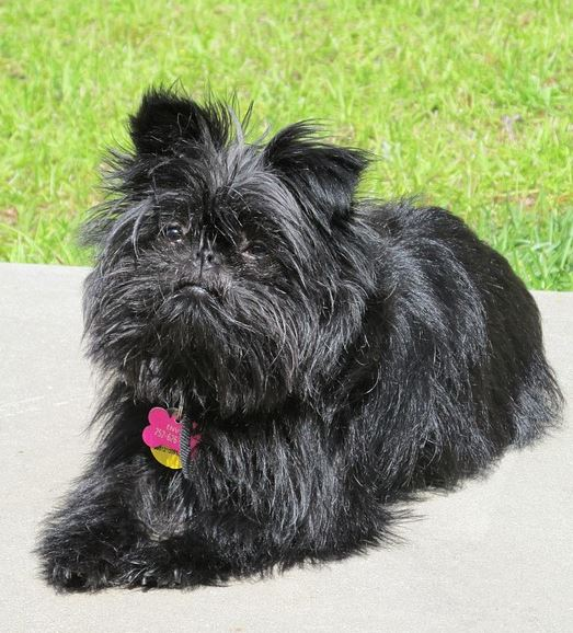 Small Dog Names - 350 Ideas For Naming Your Little Puppy  Unusual Little Dogs