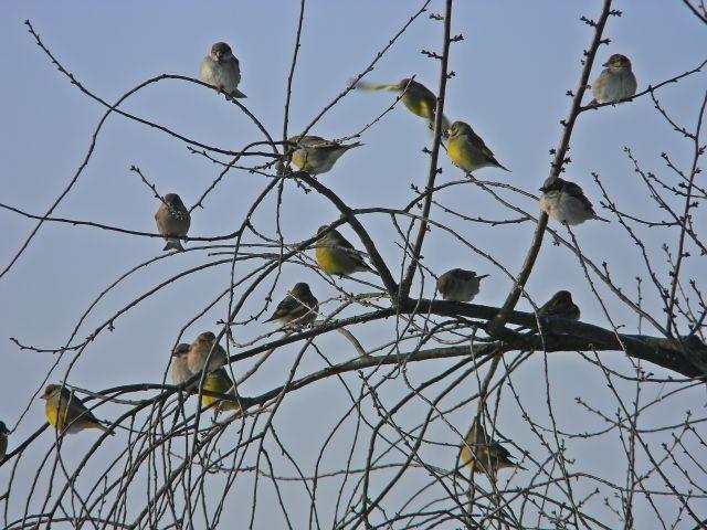 ptaki, zima, wiśnia, niebo