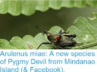 https://sciencythoughts.blogspot.com/2016/01/arulenus-miae-new-species-of-pygmy.html