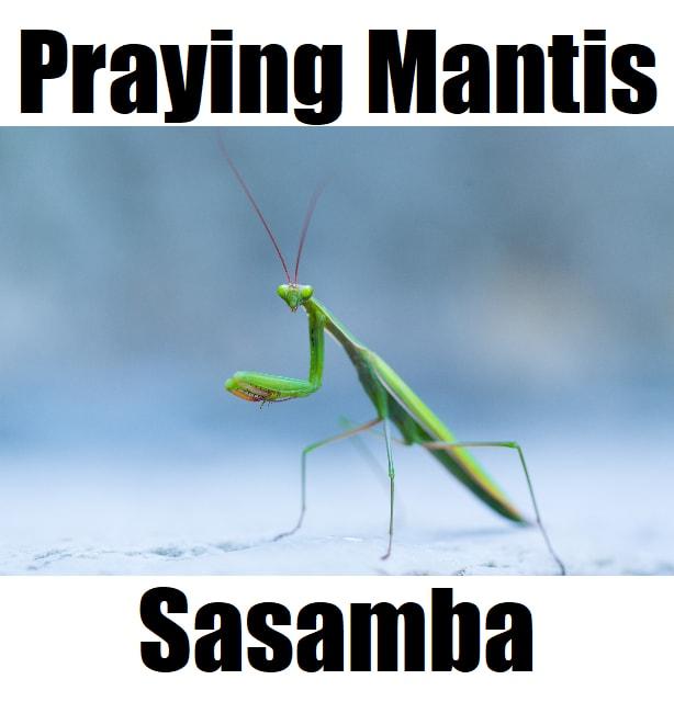 Praying Mantis in Tagalog