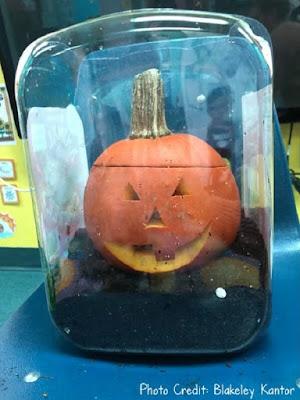 Pumpkin Life Cycle STEM Activity
