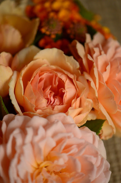 Monday vase meme, rose, Crown Princess Margareta, david austin rose, amy myers photography, small sunny garden, desert garden