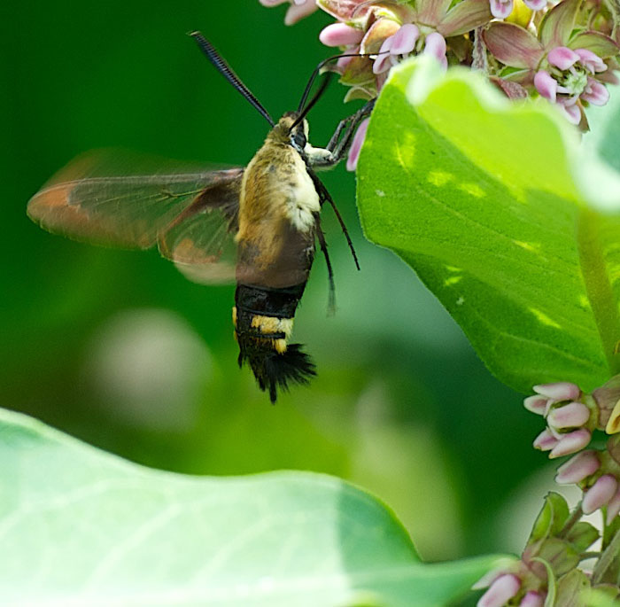 Image Result For How To Start A Hummingbird Garden