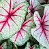 Top 10 plantas para folhagem surpreendentes