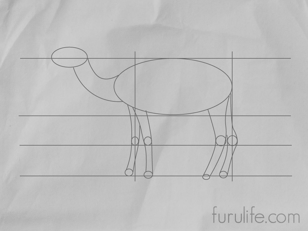 How to draw Camel - Step 3