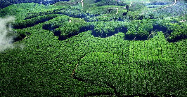 10 Manfaat Hutan Bagi Kehidupan Manusia